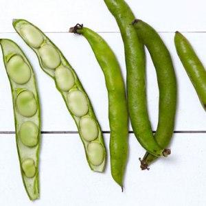 tout_spring-produce-fava-beans_381x381_0