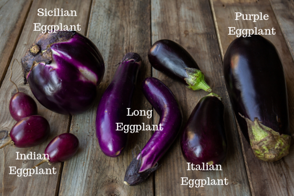 Eggplant-varietiies-with-labels.png